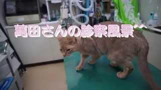 りん、はな、まんまんの猫風邪を診てもらいました。