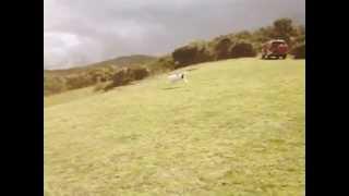 Bull Terrier Love