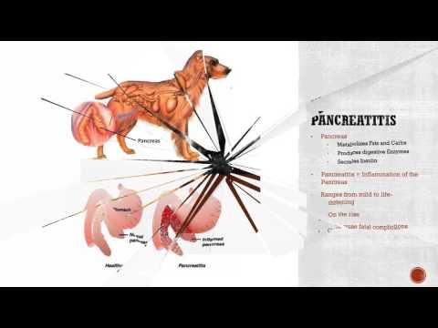 Diabetes, IBD, and Pancreatitis