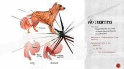 hqdefault - Diabetes Enlarged Liver Dogs