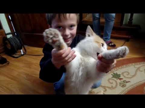 VLOG:В гостях у наших родственников.Как поживают попугайчики.Смешной кот и племянник. Активная игра
