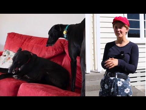 How-To Prepare for a Greyhound Adoption-Home Check