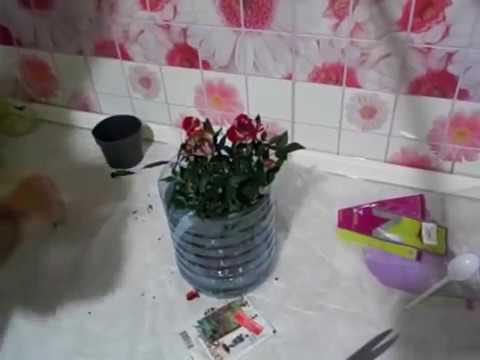 Как рассадить комнатные розы (в подарочной упаковке.)