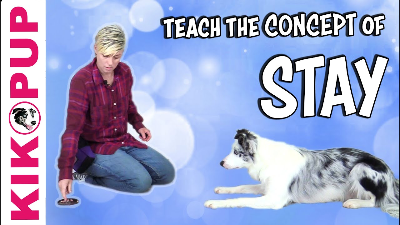 Game to Teach the CONCEPT of STAY - Dog Training - YouTube