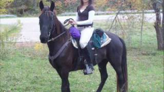 Tennessee Walking Horse For Sale(sold)