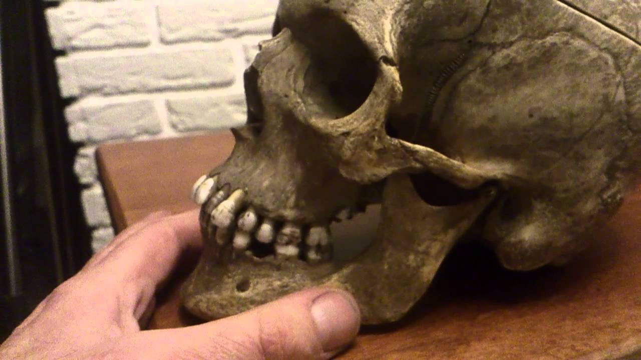 Human Skull for sale