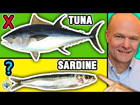 Top 5 Best Fish You Should NEVER Eat & 5 Fish You Must To Eat
