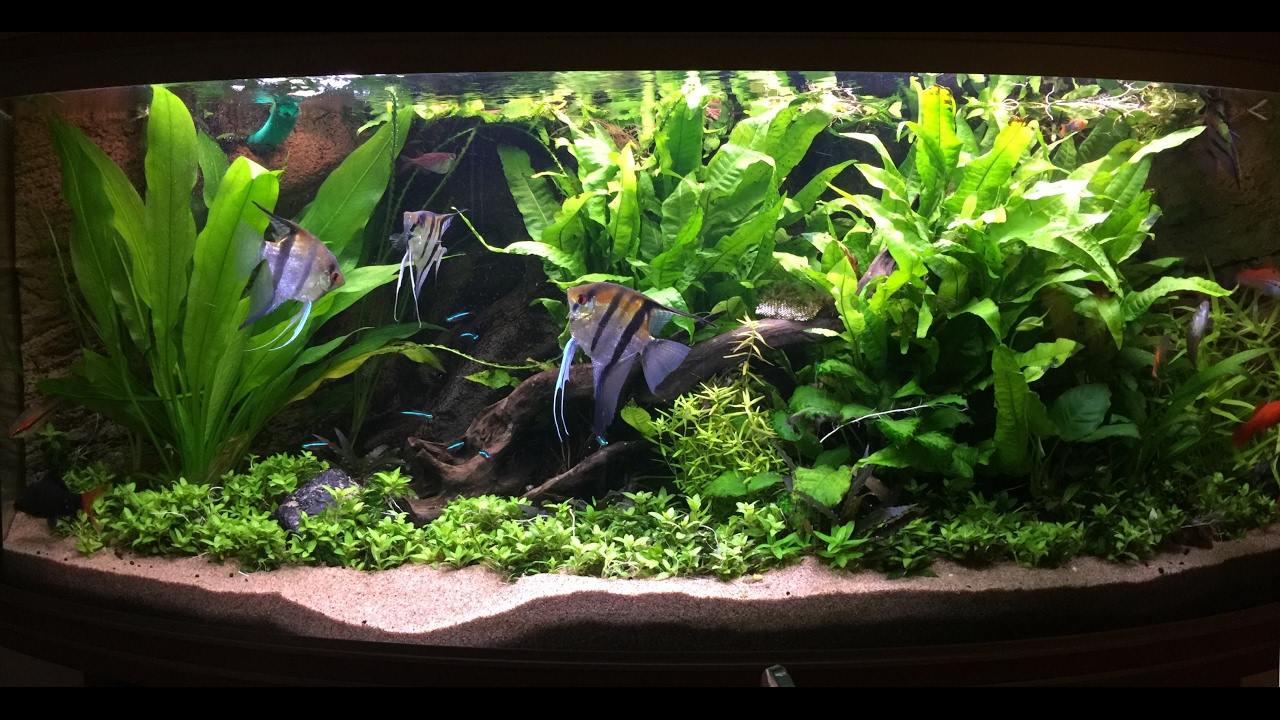 hight resolution of non co2 low tech heavily planted tank