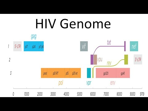HIV genomic structure and function