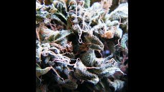 Dope Smoker - Legalize It (2017) (New Full Album)