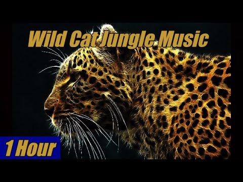Wild Cat Jungle Music-1 Hour
