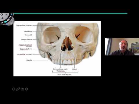 Facial Bones