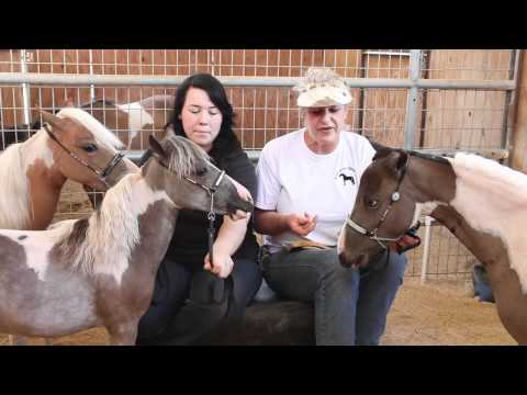 Miniature Horse Ranch Achin' Acres.mov