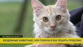 Бобруйский пенсионер тратит весь свой доход, чтобы прокормить бездомных котов