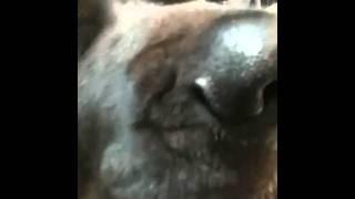 Bruiser eats Raviolli