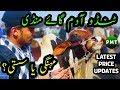 Cow Mandi 2019 Tando Adam Latest Rates Updates | Cows for SALE in Pakistan | Bakra Eid 2019 Qurbani