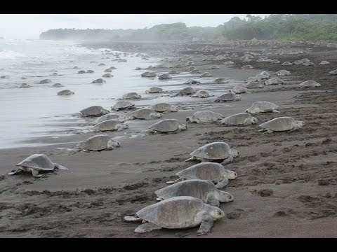 EPIC TURTLE INVASION! MUST SEE!
