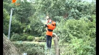 Как правильно обрезать сухие ветки и старые деревья?(Эксперты