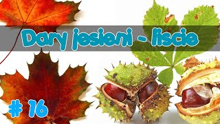 ROZPOZNAWANIE DRZEW IGLASTYCH I LIŚCIASTYCH   Dary jesieni