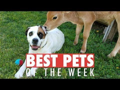 Best Pets of the Week | August 2018 Week 1
