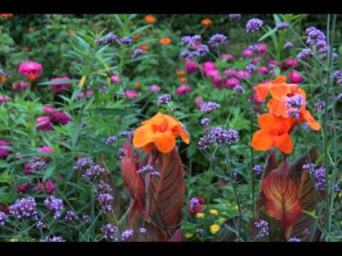 2015  Cantigny Park, Summer Gardens in Wheaton, Illinois