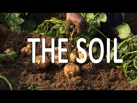 Die Böden—unsere Lebensgrundlage—sind tod-krank.
