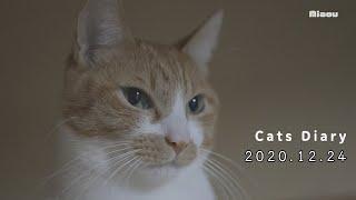 猫日記ライブ配信が終わった後、スコティッシュフォールドのアリスが奥の部屋から出てきて猫部屋へ入って行った。 猫部屋 Live配信中!