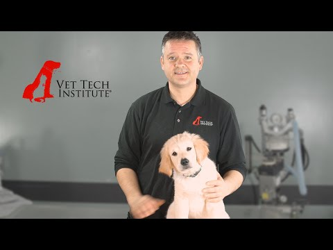 Vet Tech Institute: Admissions