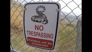 """Protected"" Rattlesnakes In Jeopardy"