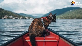 Cat Loves To Go On Adventures With Her Mom | The Dodo