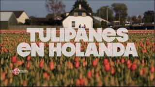 Los campos de Tulipanes en Bici | Países Bajos #7