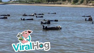 Otter-ly Adorable || ViralHog