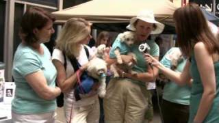 All For Animals #2: Broadway Barks 2009