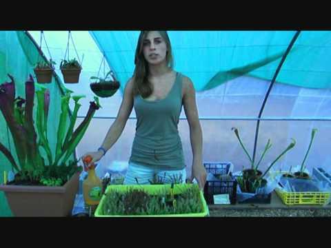 El jardinero en casa plantas carnivoras doovi for Jardinero en casa