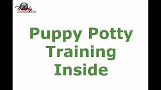 Puppy Potty Training Inside | Top Tips