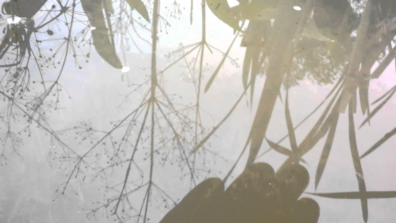 10 фев 2016. Разведение дафнии на банановых корках. Живые корма для аквариумных рыб и мальков. Loading. Unsubscribe from живые корма для.