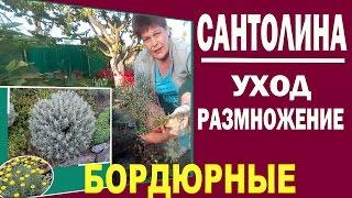 видео Как выбрать бордюрные цветы