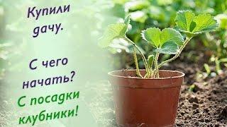 Клубника. Уникальный способ посадки клубники.(В этом видео вы узнаете как посадить клубнику так, чтобы она давала хороший урожай., 2015-08-11T01:57:11.000Z)
