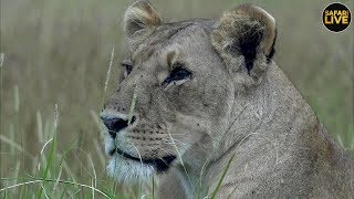 safariLIVE - Sunrise Safari - April 23, 2019
