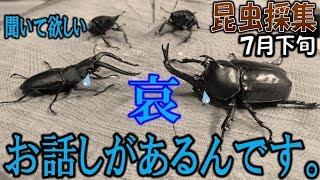 カブトムシ+クワガタ=昆虫採集 ああ、またやられてる…(くろねこチャ...