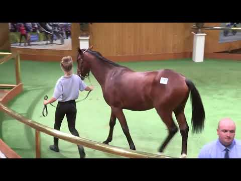 Lots 126 to 145 - PGG Wrightson 2018 Yearling Sale