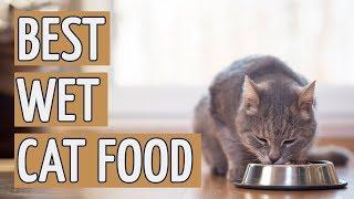 ⭐️ Best Wet Cat Food: TOP 10 Wet Cat Foods of 2018 ⭐️