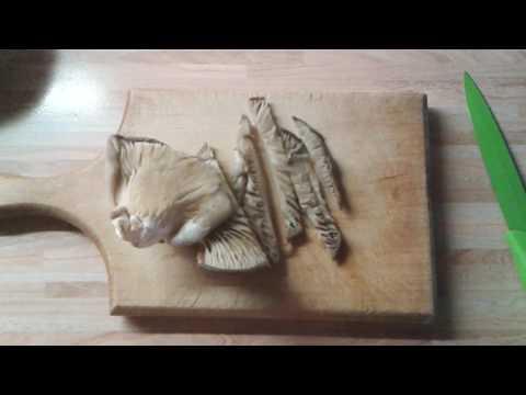 Odlične Bukovače/Great Oyster Mushrooms