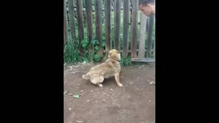 Собака отгрызает свой хвост