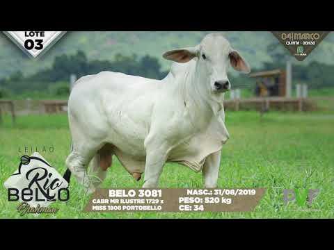 LOTE 03   BELO 3081