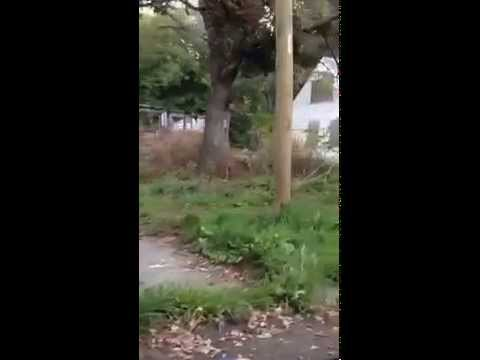 Eminem's Childhood House! 8 Mile Rd