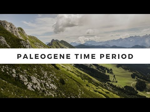 What was life like during the Paleogene Time Period ?