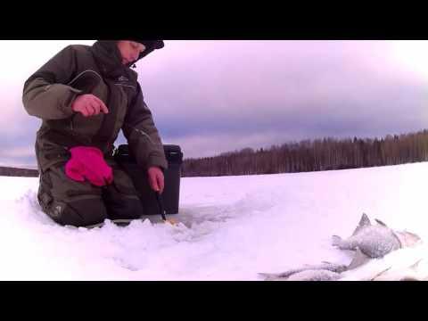 ловля окуня на самотряс видео