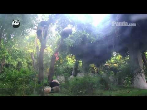 Three little monkeys climbing up a tree