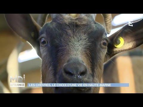 Une chèvrerie Haute-Marnaise bio et participative